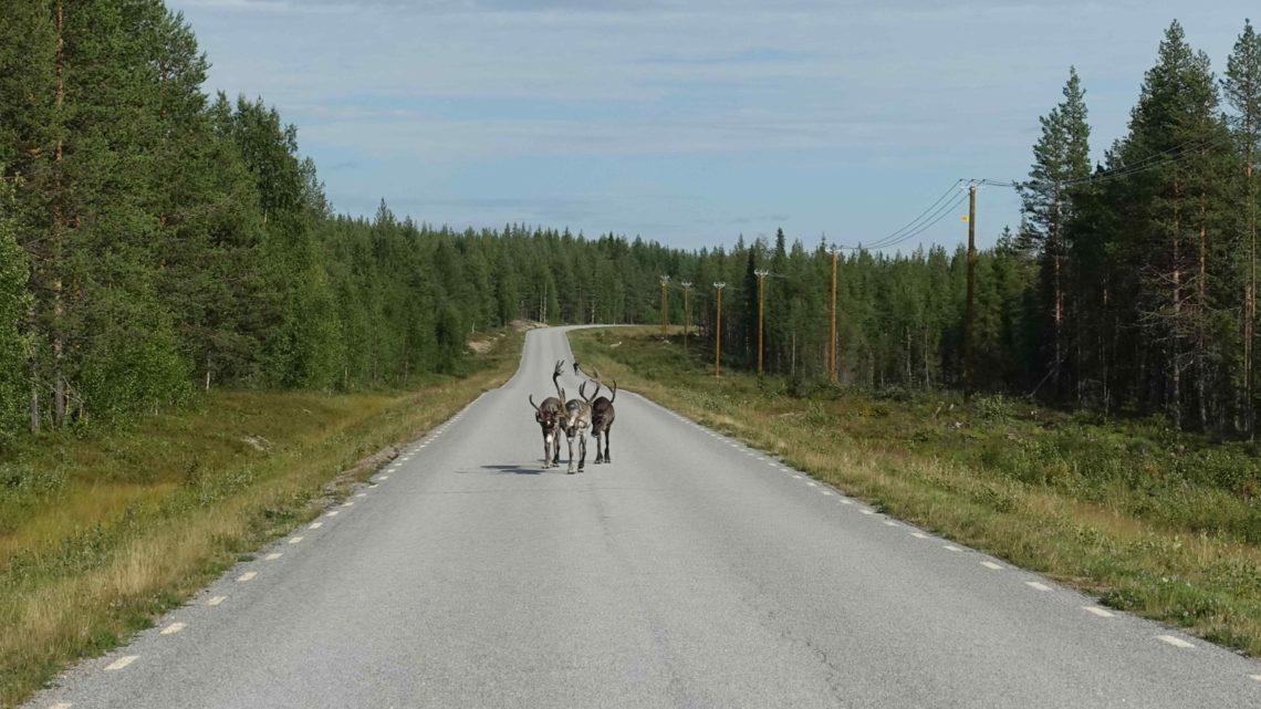 Laponie suédoise